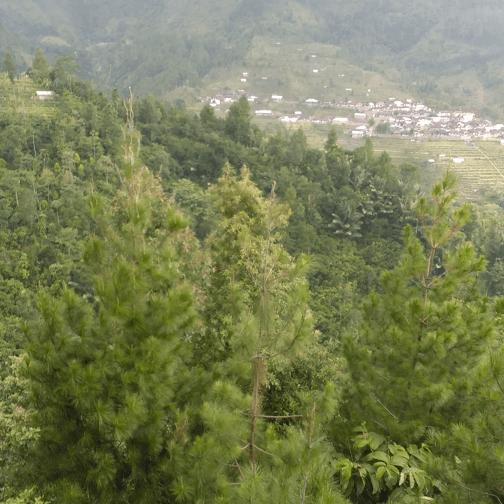 Pemandangan dari curug bajing, indah banget. Lokasi di desa telogo pakis kec. petungkriyono